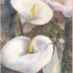 Calla Lilies - Helena Castro Painting